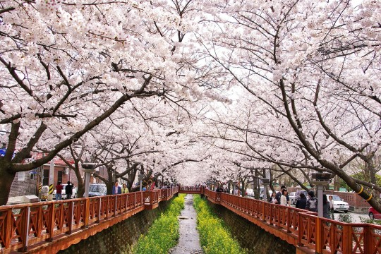 5 DAYS 4 NIGHTS LADIES TRIP KOREA SPRING